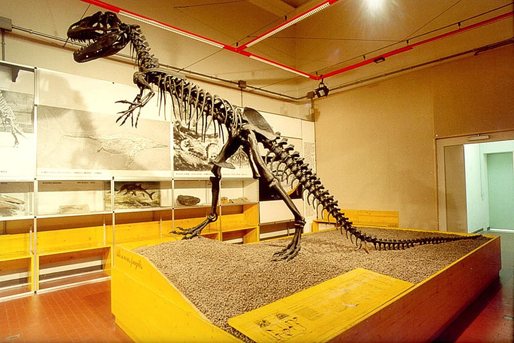 La macchina del tempo geologico dinosauri elefanti for Nomi di rettili