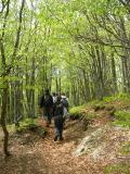 Foreste del Monte Penna