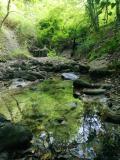 Fosso di Monte Verde