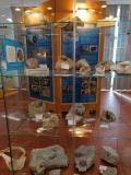 Crostacei e denti di squali di 1.8 milioni di anni fa