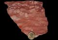 Calcare rosso ammonitico