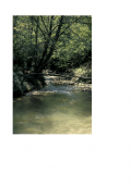 I rii di Cherasco: l'originale storia geologica di una peculiarità del nostro territorio.