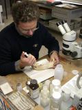 Attività di laboratorio paleontologico