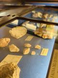 sala di Paleontologia