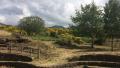 Foto Parco dell'Etna