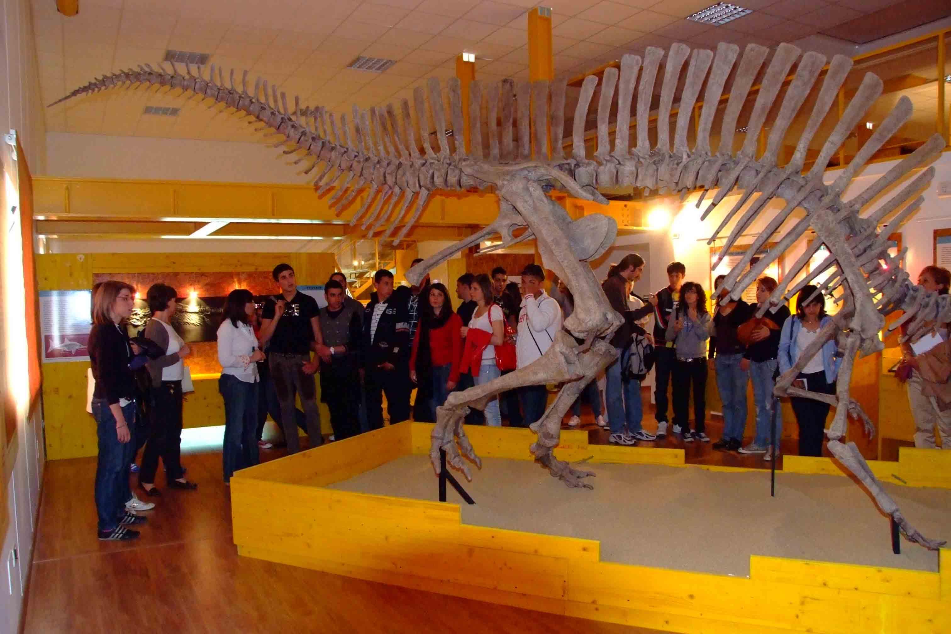 Visite guidate al museo di paleontologia del dipartimento for Interno unical